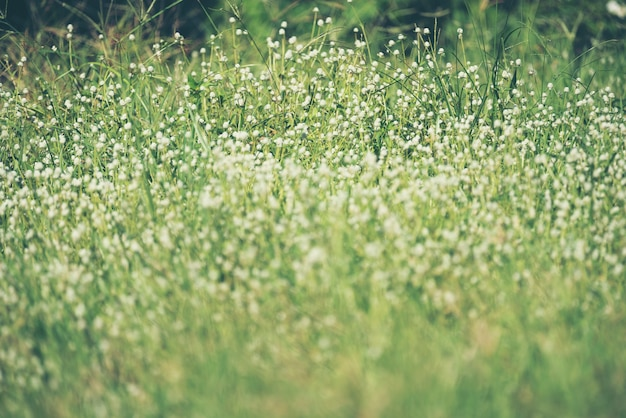 White flowers with grass background photo premium download white flowers with grass background premium photo mightylinksfo