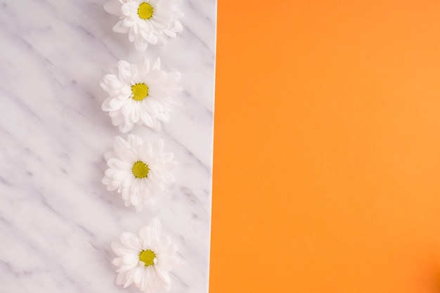 White frame with rows of daisy flowers on orange backdrop Photo ...