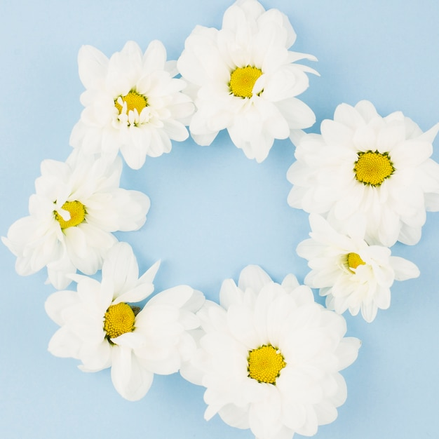 White fresh flowers arranged in circle on blue background photo white fresh flowers arranged in circle on blue background free photo mightylinksfo