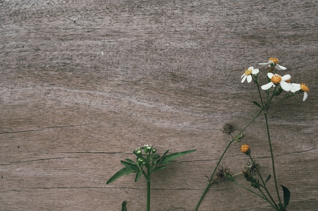 White grass flowers with brown wood . Free Photo