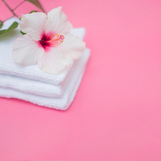 White hibiscus flower and towels on pink background Free Photo