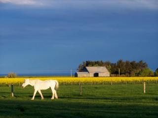 White horse and old tin shed Free Photo