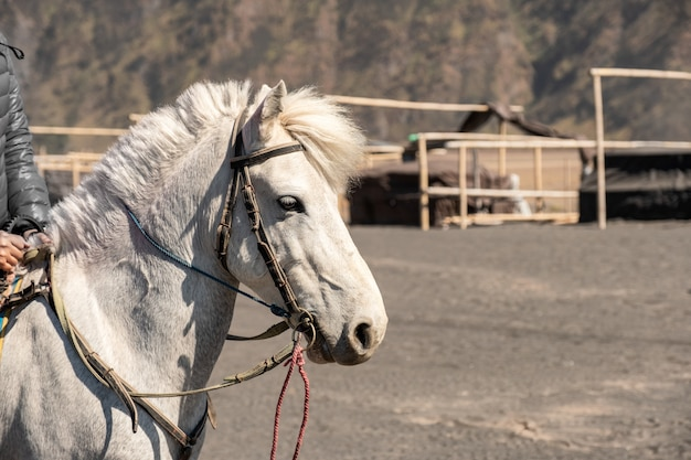White horse with rider for activity walking around on desert Premium Photo