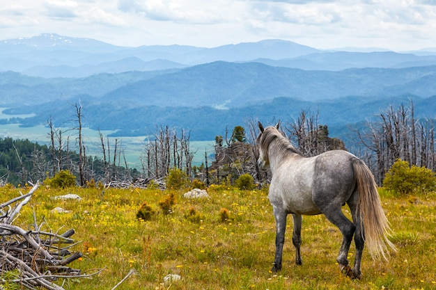 White horses running free in meadow with forest with high mountain, river and sky backdrop. horse in the wild. Premium Photo