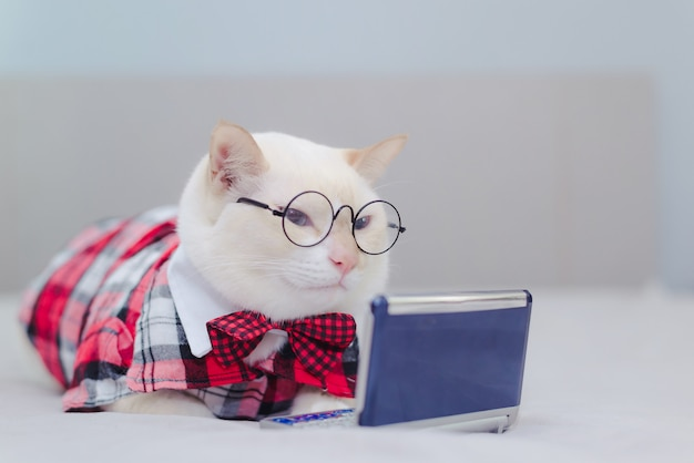 White kitten sitting on the bed looking at tablet. cat looking video on the internet Premium Photo