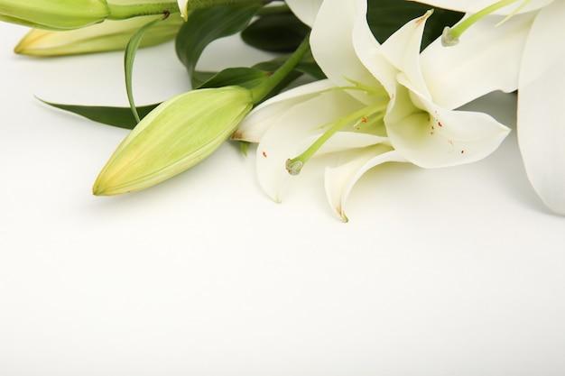 白に分離された白いユリの花 Premium写真