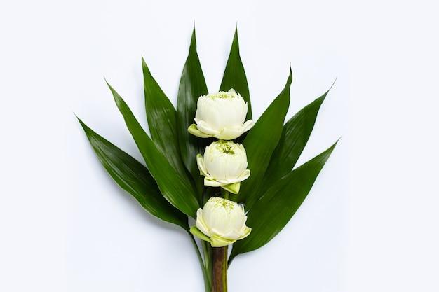緑の葉と白い蓮の花。上面図 Premium写真