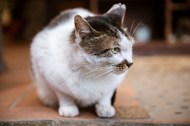 White lovely cat Premium Photo