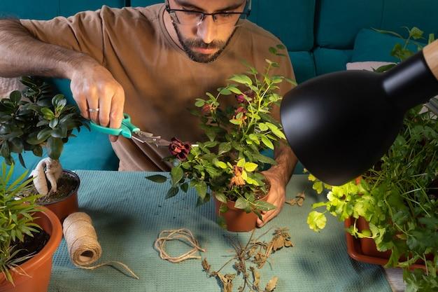 眼鏡の剪定と観葉植物の世話をしている白人男性 Premium写真