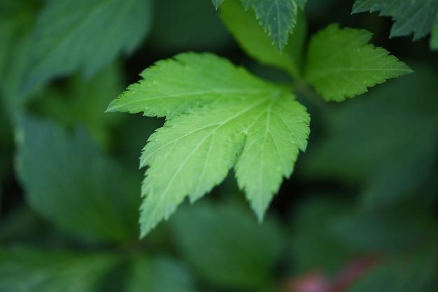 Белая полынь оставляет зелень для травы растительное питание природа в саду Premium Фотографии