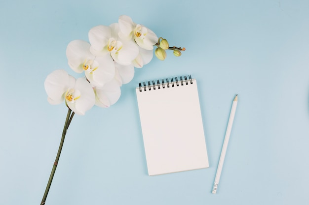 White orchid flower branch; spiral notepad and pencil on blue background Free Photo