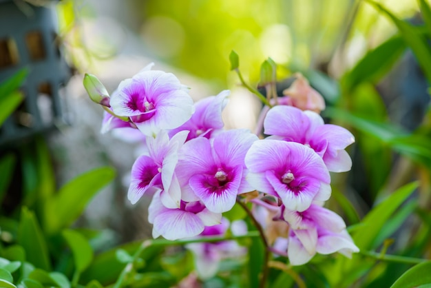 White orchid flowers on the tree Premium Photo