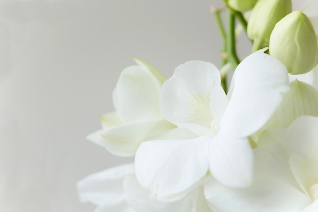 White orchid on gray color background Premium Photo