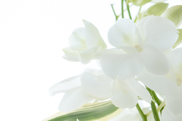 White orchid on white background Premium Photo