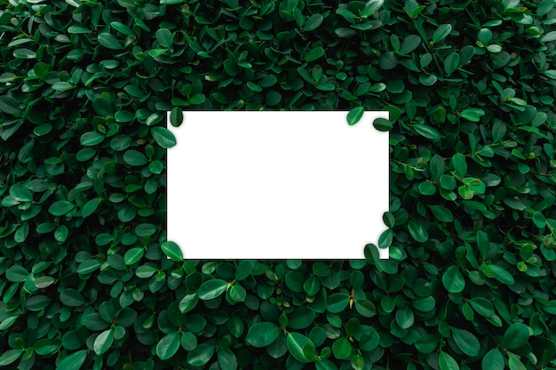 White paper frame on green leaves wall background Premium Photo