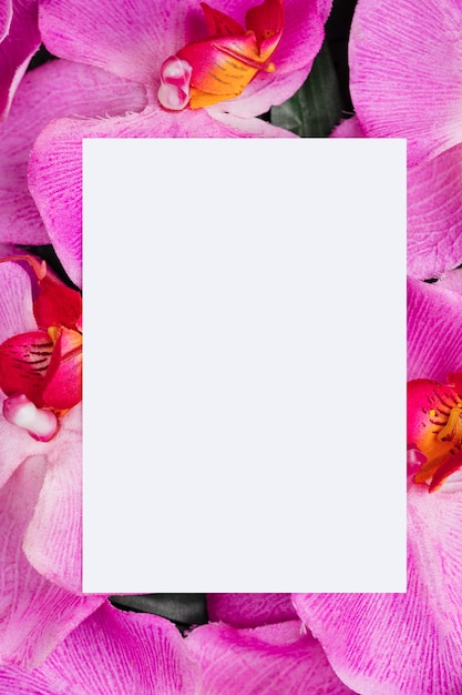 White paper on orchid flowers background Free Photo