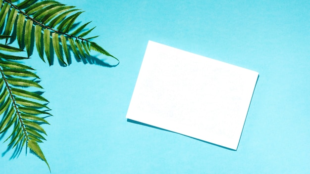 White paper with palm leaves on colorful surface Free Photo