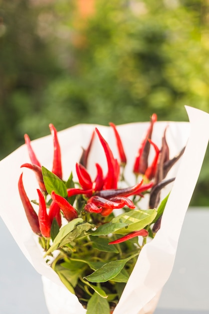 White paper wrapped around red chilies Free Photo