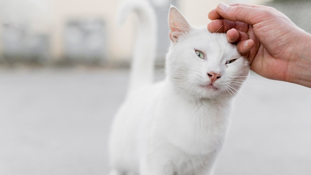 White rescue cat being pet at adoption shelter Free Photo