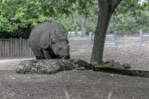 Rinoceronte bianco che cammina in un campo circondato da boschi e vegetazione sotto la luce del sole Foto Gratuite