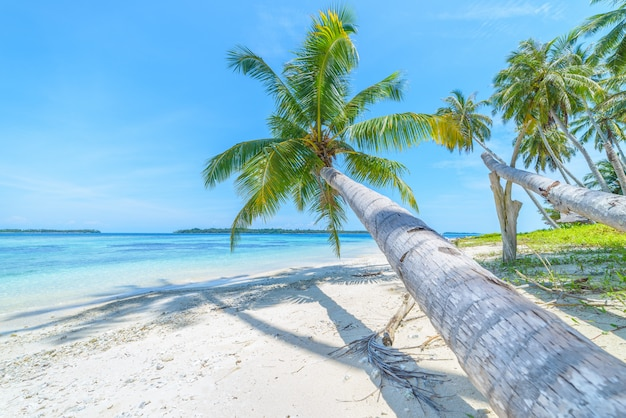 White sand beach with coconut palm trees turquoise blue water coral reef Premium Photo