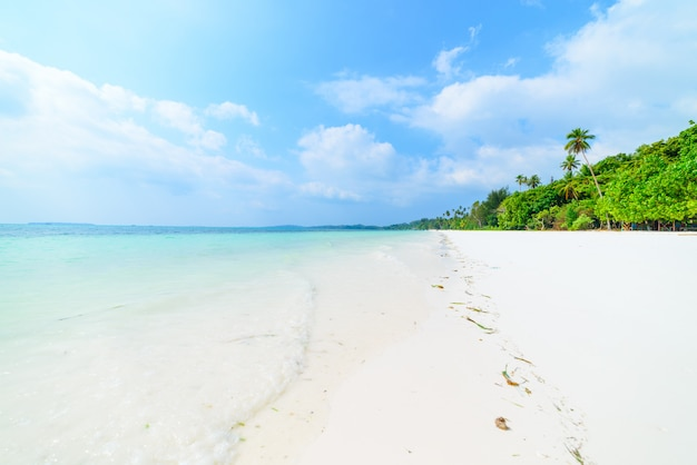 White sand beach with coconut palm trees turquoise transparent water, tropical travel destination, desert beach no people - kei islands, moluccas, indonesia Premium Photo
