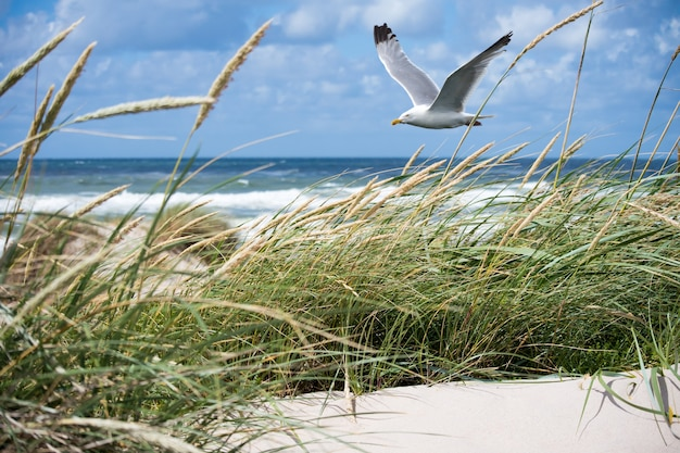 White seagull flying over the coast Free Photo