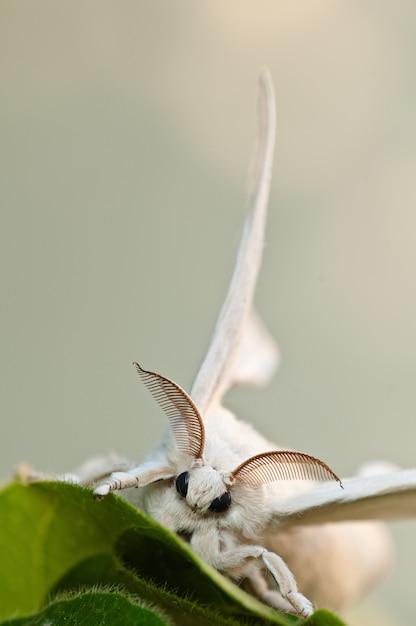 Белый тутовый шелкопряд с размытым фоном Бесплатные Фотографии