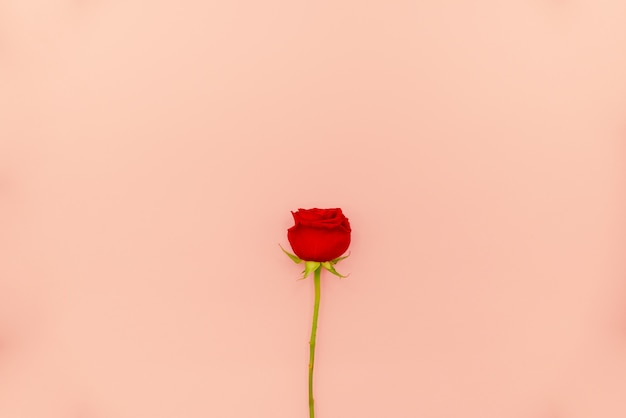 White spiral notepad with red roses on light pink background. Premium Photo