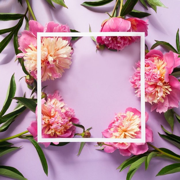 White square frame with pink peonies on purple background Premium Photo
