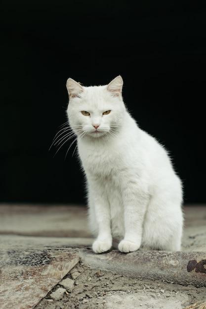 White street cat with green eyes on black Premium Photo