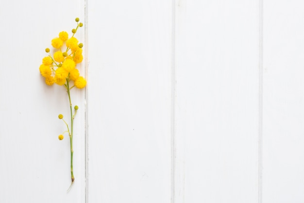White surface with decorative yellow plant Free Photo
