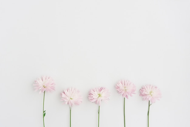 White surface with five flowers in row Free Photo
