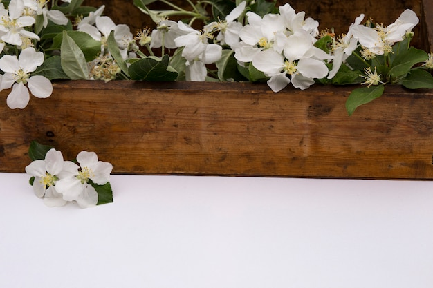 On an white table is an old wooden box with apple tree branches Premium Photo