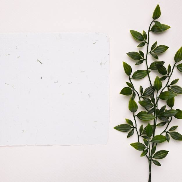 White textured paper near the artificial green twigs with leaves on white backdrop Free Photo