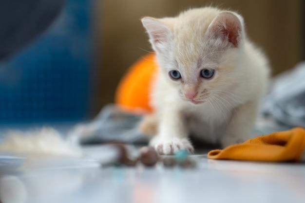 흰색 타이어 새끼 고양이, 1 개월, 집에 서. 프리미엄 사진