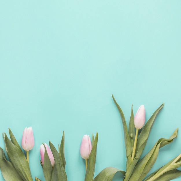 White tulip flowers on table Free Photo