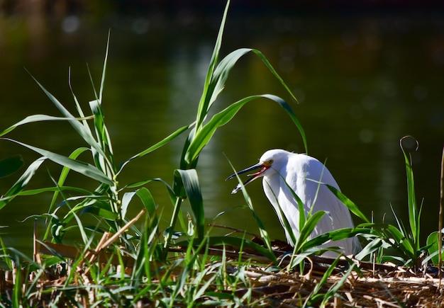Uccello acquatico bianco seduto sull'erba vicino al lago Foto Gratuite