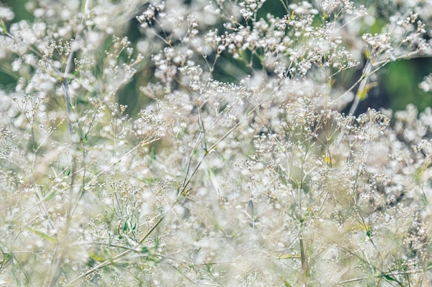 White wild flowers toned with pastel color beige and cool muted hues Premium Photo