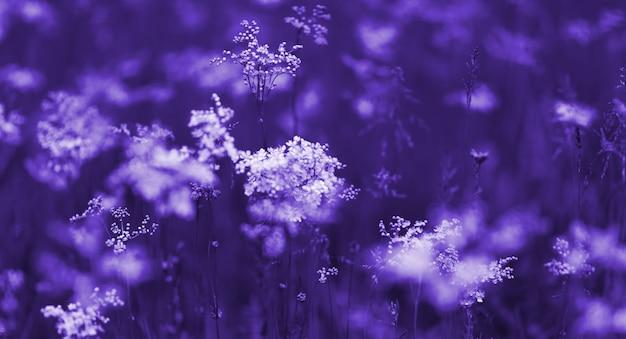 日の出、ブルーの色調で自然な秋の背景に白い野の花秋自然風景 Premium写真