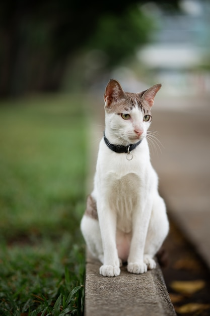 A white with brown stripe cat is standing on the road in the garden. Premium Photo