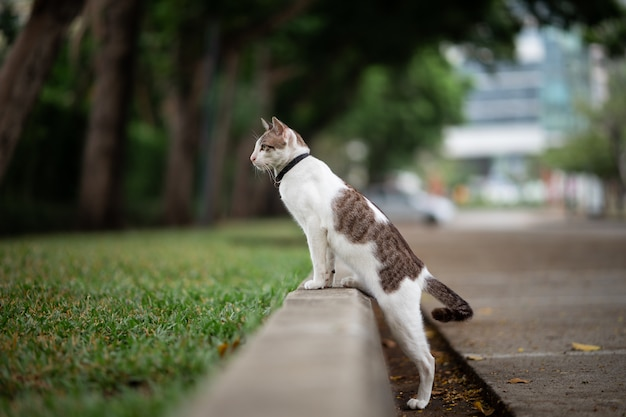 A white with brown stripe cat is walking in the garden. Premium Photo