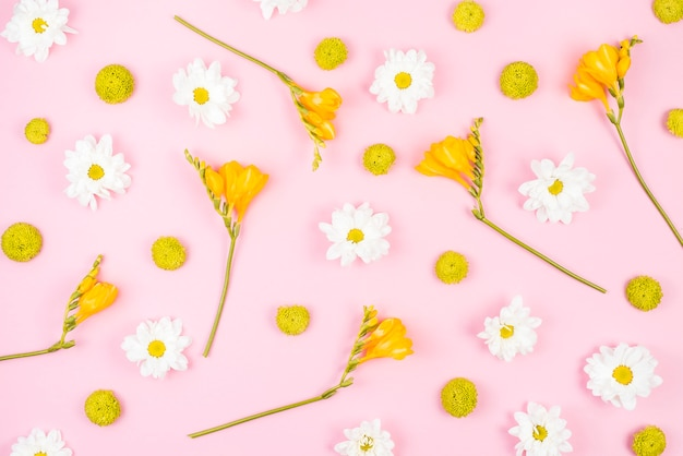 White and yellow flowers on pink background Photo | Free ...