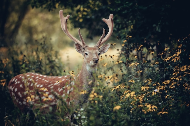 Whitetail deer standing in autumn wood Free Photo