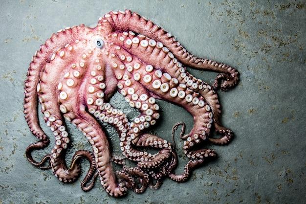Whole fresh raw octopus on gray slate Premium Photo