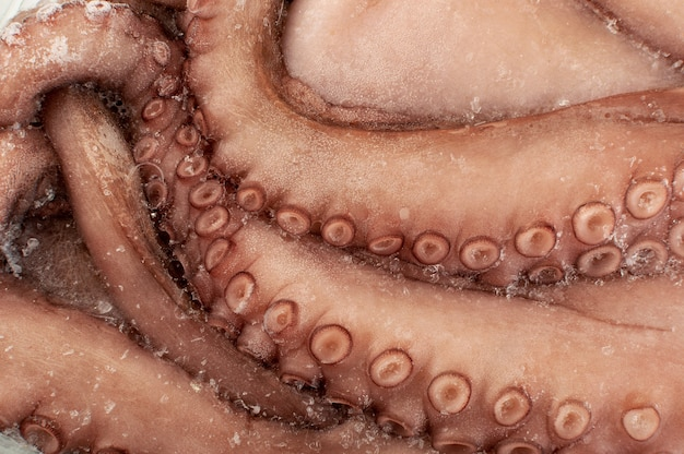 Whole frozen octopus legs or big tentacles. raw iced seafood, squid, calamari or cuttlefish texture closeup Premium Photo