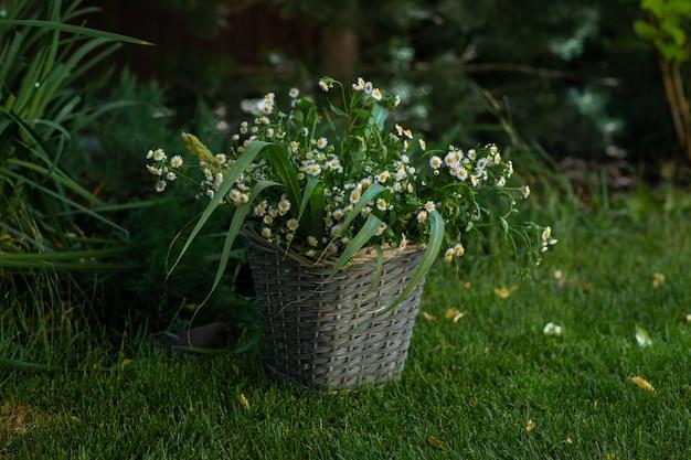 Плетеная корзина с букетом ромашек на зеленой траве в саду Premium Фотографии