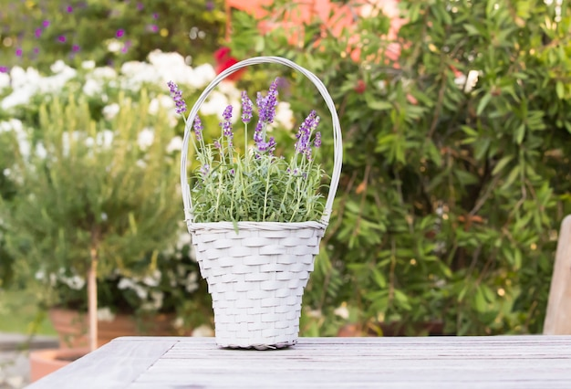 Wicker basket with lavender. Free Photo
