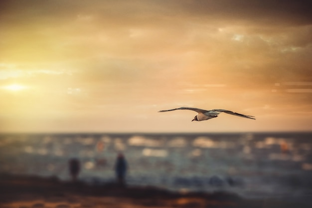Wide angle shot of a bird flying over the water during sunset Free Photo