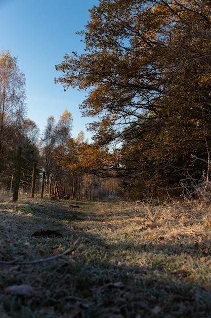 Широкоугольный снимок леса, полного деревьев и зелени под голубым небом Бесплатные Фотографии